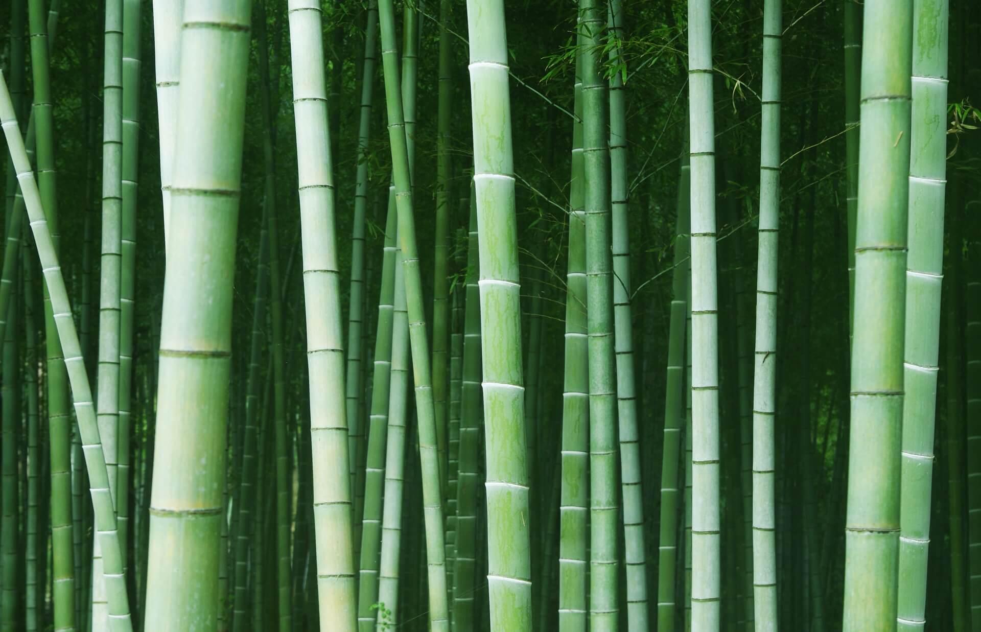 ねずこ なぜ竹